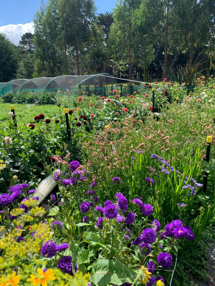 Bloomin Beautiful Flower Farm