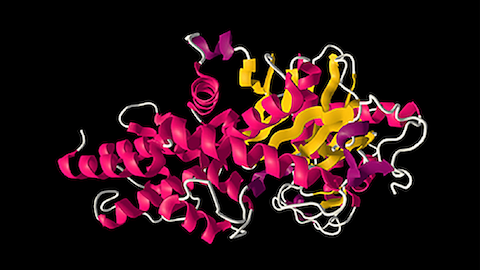 Mutations on Protein Molecular Structure