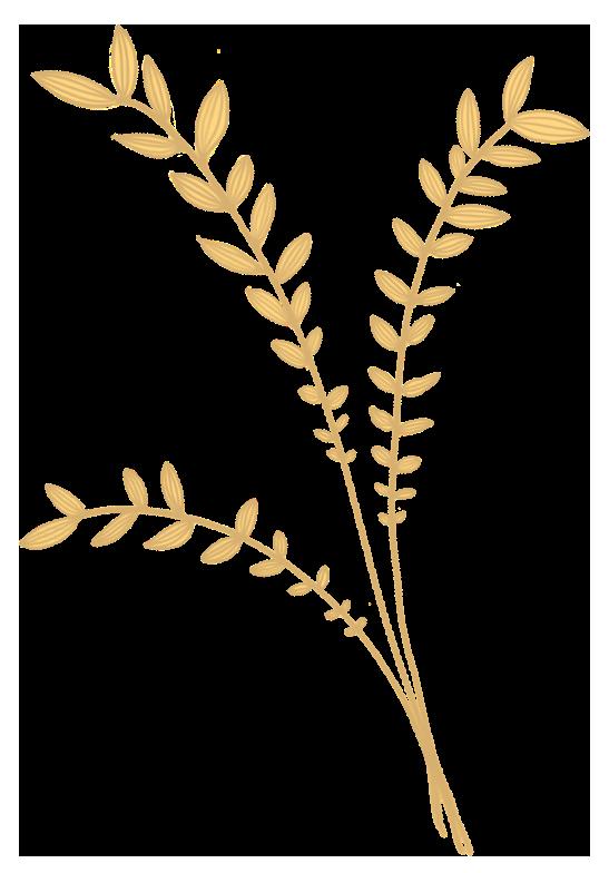 haferpflanze