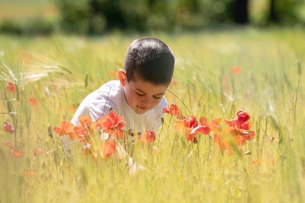 séance photo enfant dans un champ de coquelicots en Provence