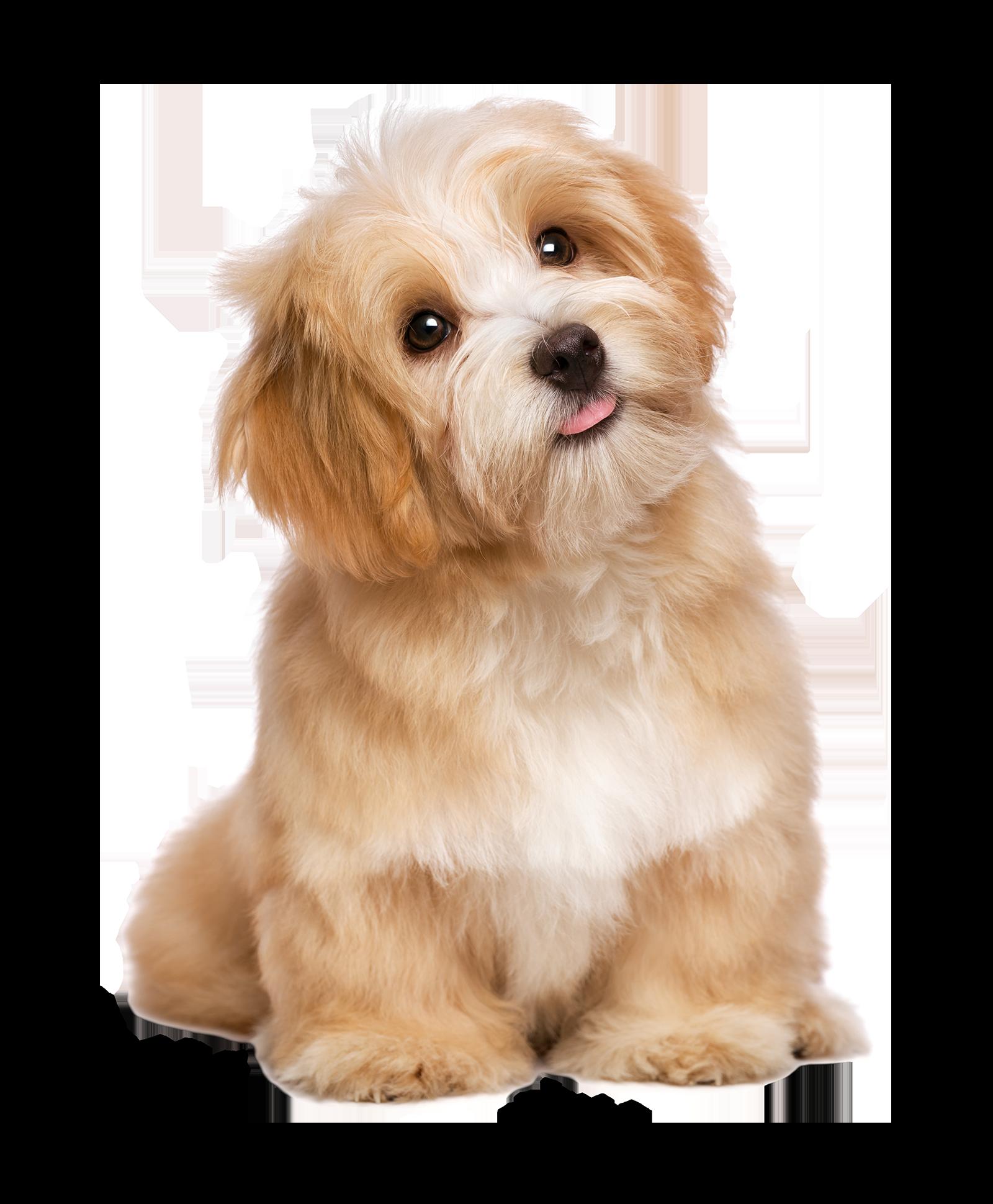 Pet Friendly Puppy