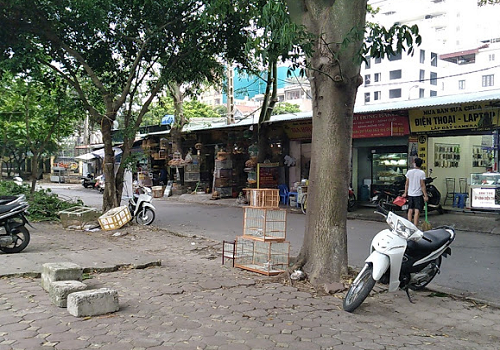 Chợ Chim Cảnh YÊN PHÚC - P. Phúc La, Hà Đông, Hà Nội