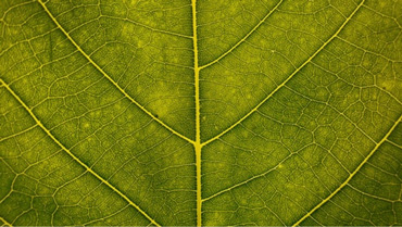 Viens of green leaf symbolising connecting with everyone