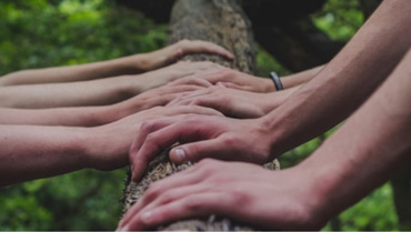 Series of hands on a bark of tree