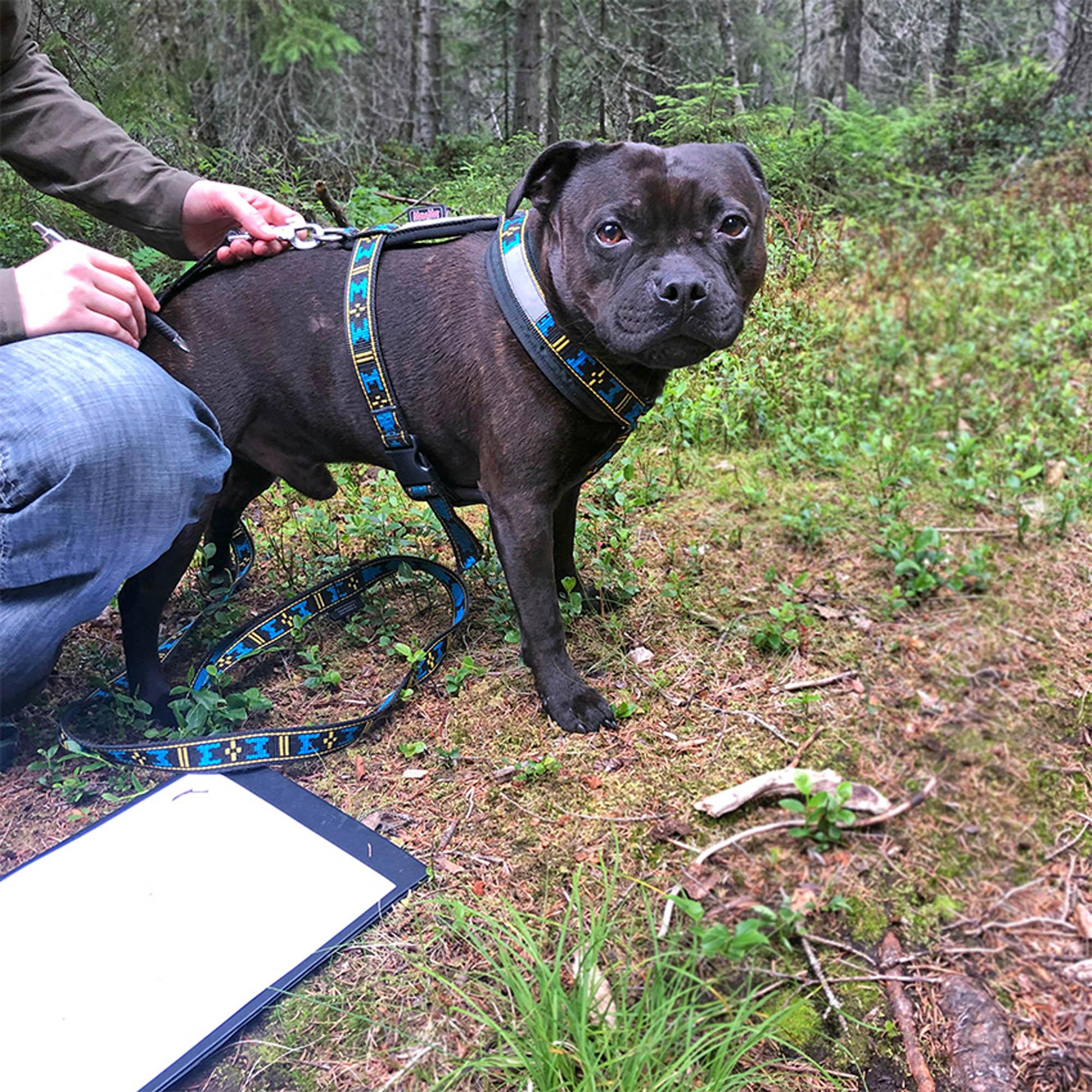 Träningsplan och hund utomhus