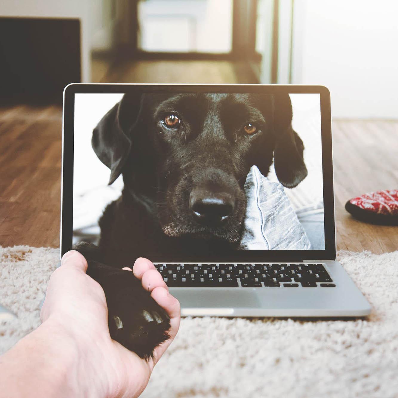 Hund räcker fram tassen genom datorskärmen