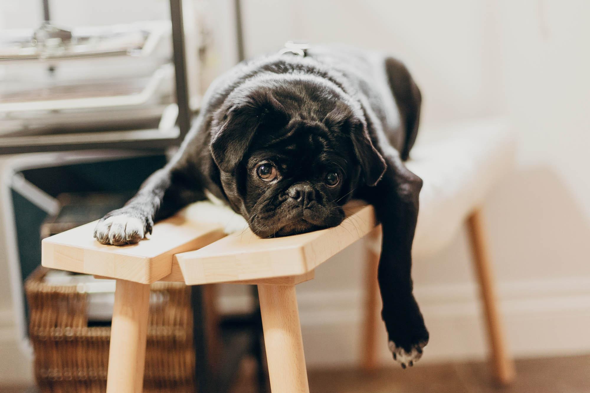 Hundmassage - när, hur och varför?