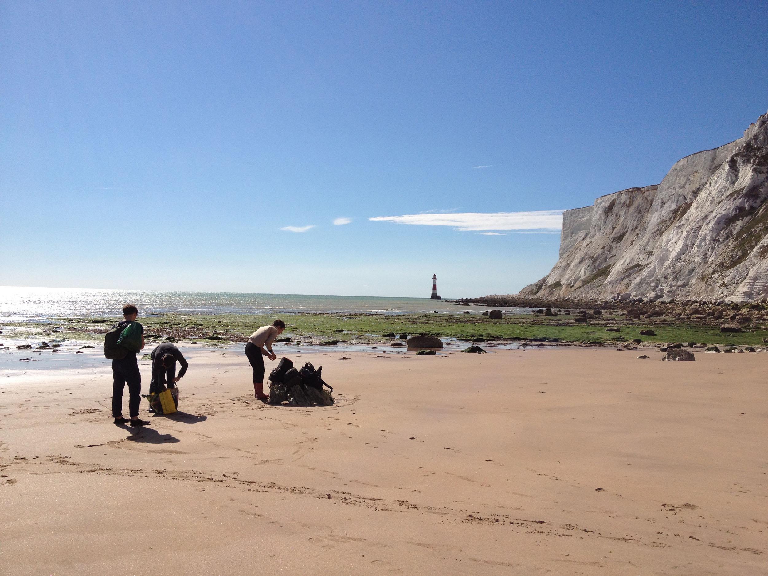 Glithero team foraging seaweed on the beach
