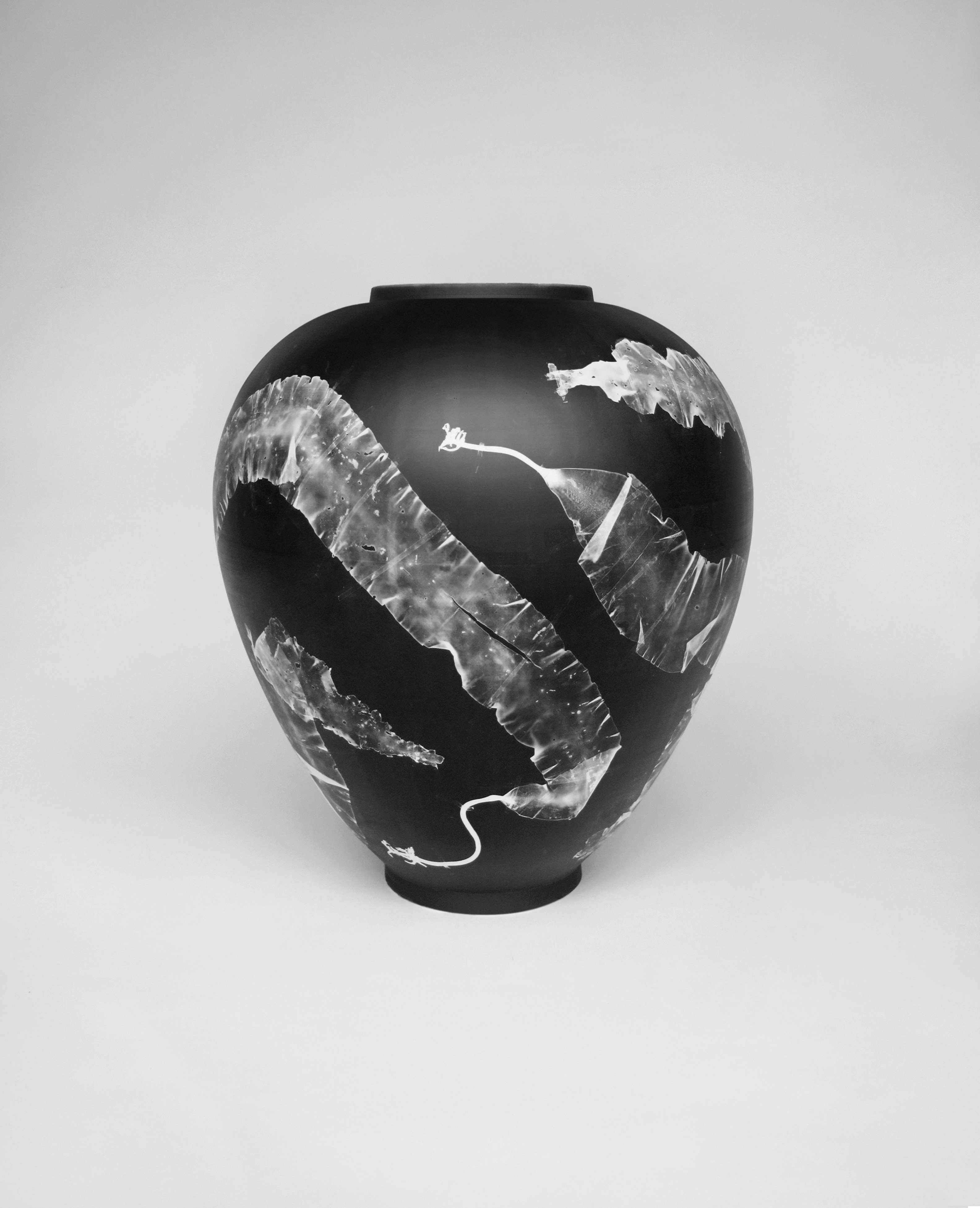Silverware is a collection of porcelain vases with silver gelatin photograms of coastal seaweed. The images on the vases have been created using an original photographic technique. Seaweeds are temporarily attached to the surface of sensitised vases before being resolved within a beam of light.