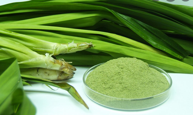 6 effects of pandan leaves that bring great benefits to health
