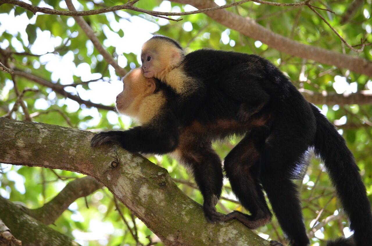 A monkey on a tree branch.