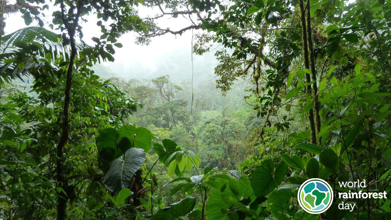 Image from the rainforest.