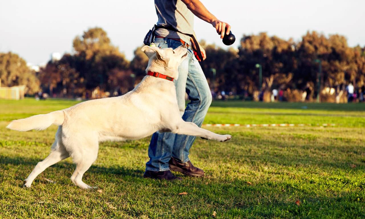 dog-playing1.jpg