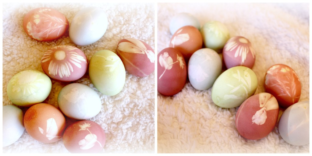 Natural Dye Eggs with Flowers and Food