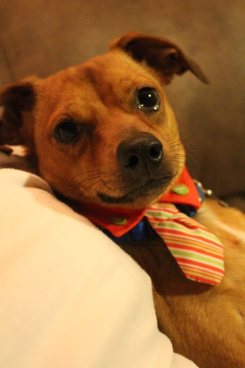 Hopper Dog In His Sunday Best