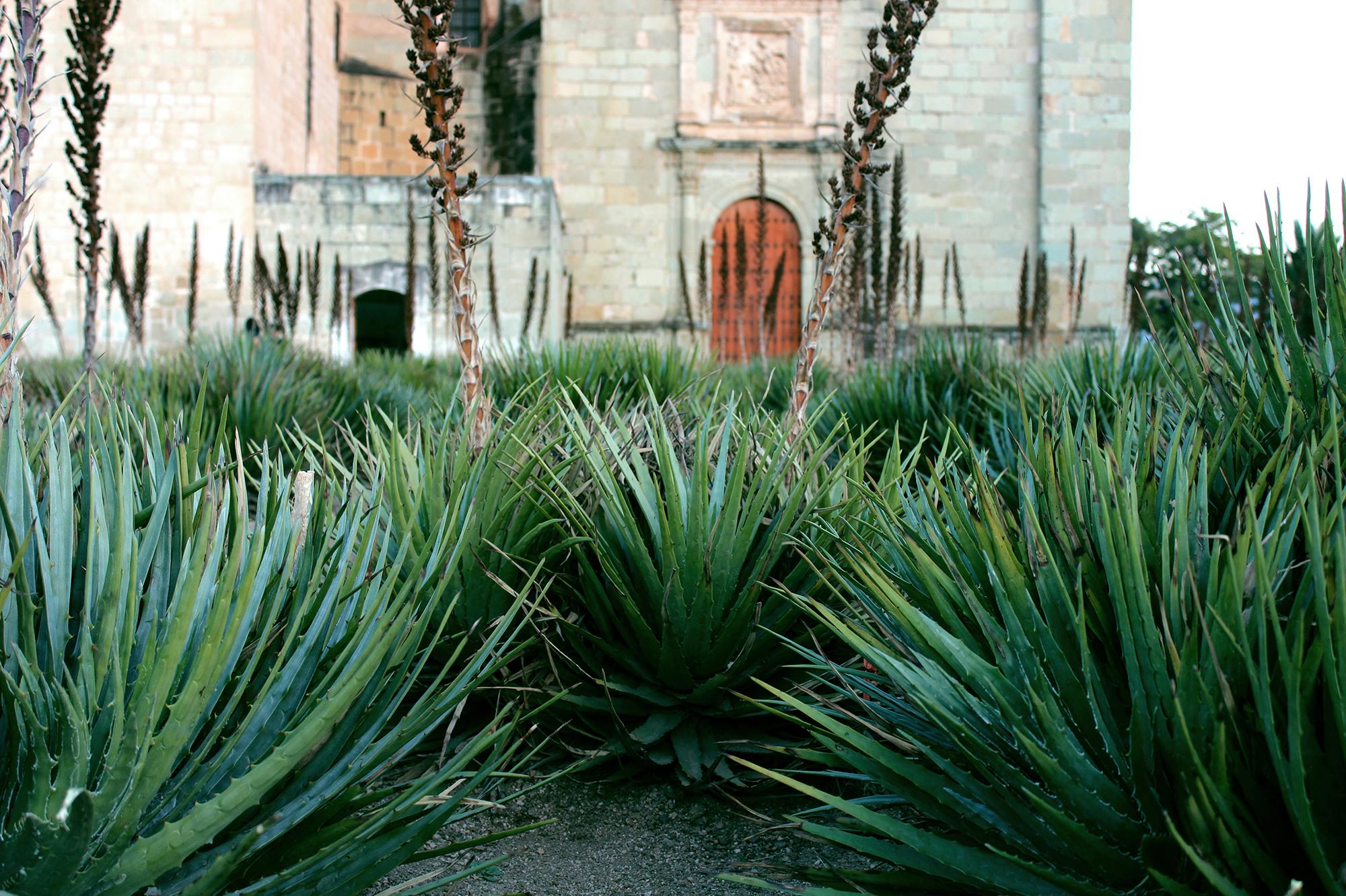 Church of Santo Domingo in Oaxaca City. Photo by Norma Contreras (Unsplash).