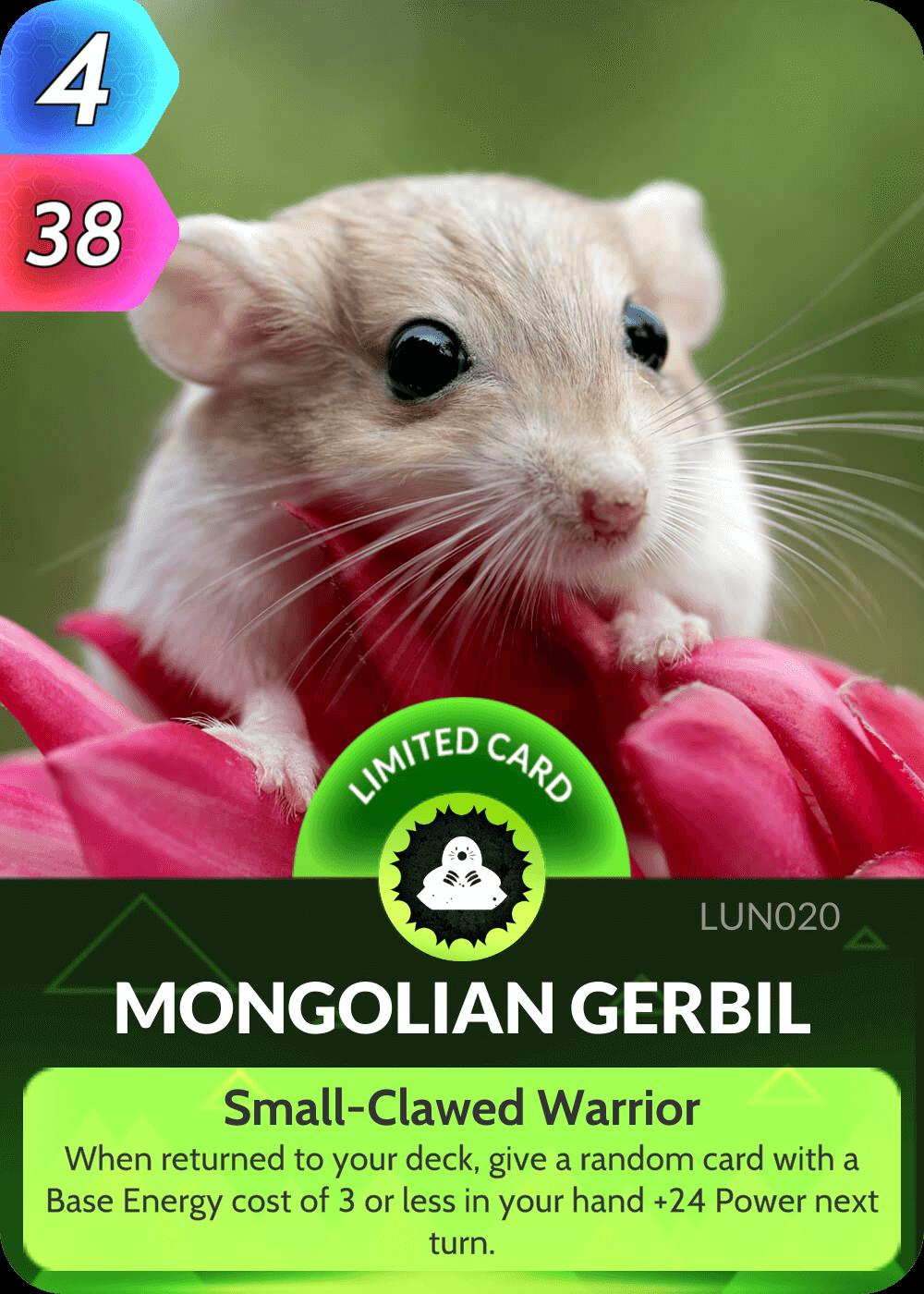 Mongolian Gerbil