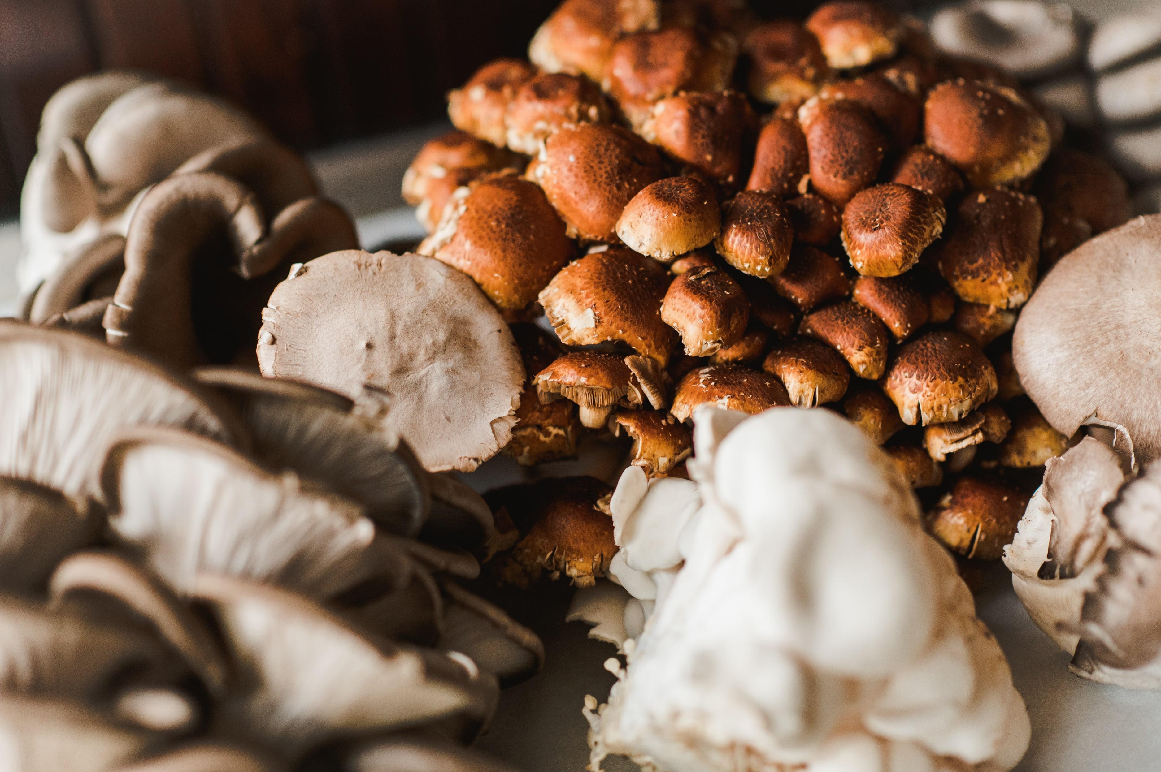 Bounty of mushrooms
