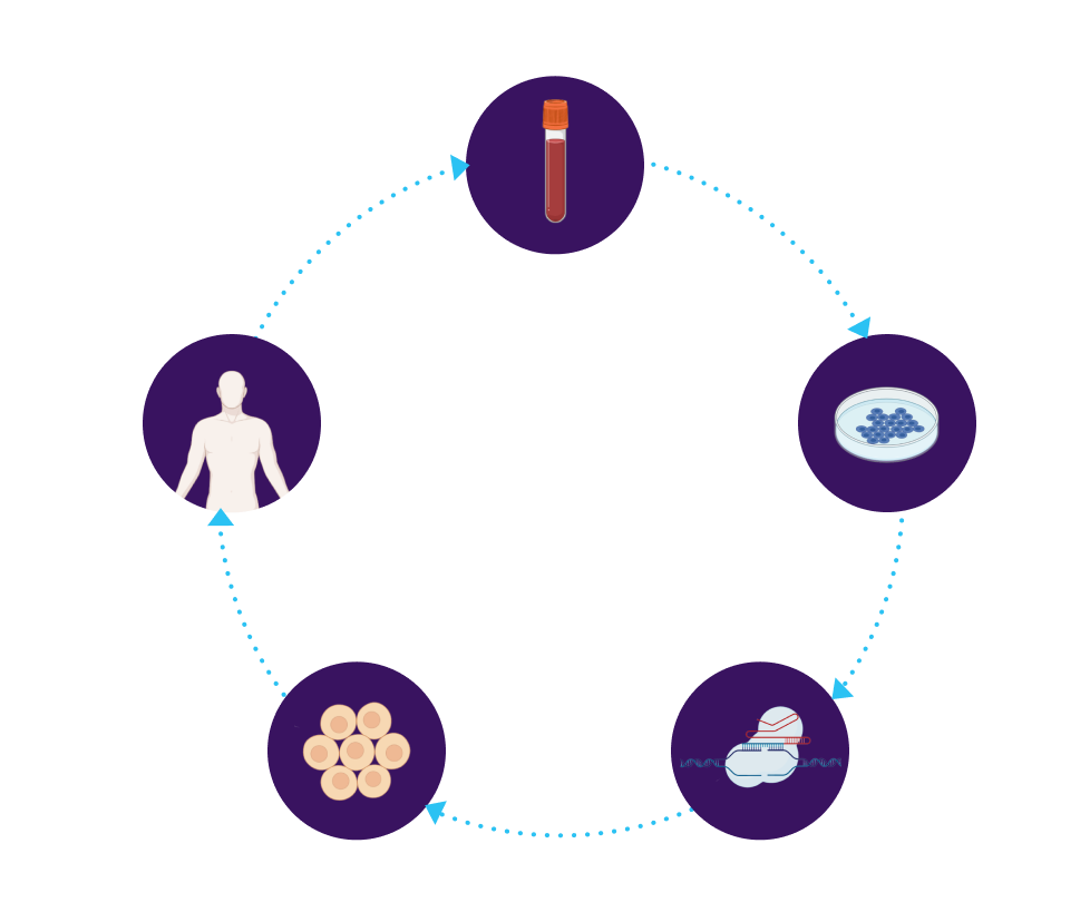iPSCs drawn from patient, repaired, differentiated, and returned to same patient