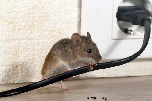 Will Homeowners Insurance Pay For Rodent Damage?