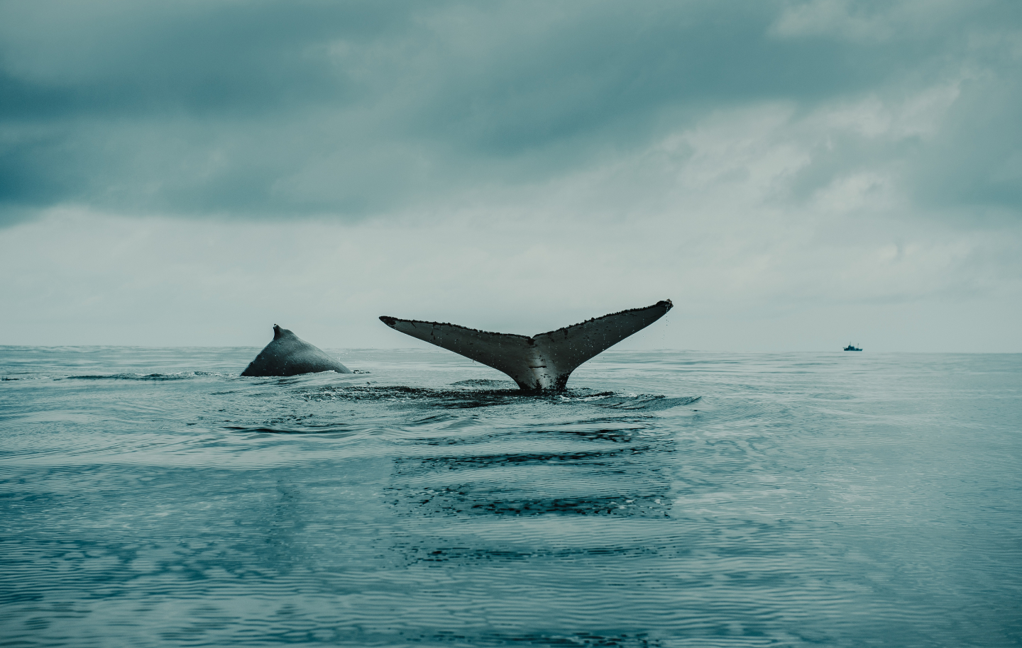 Ocean Collective Whale
