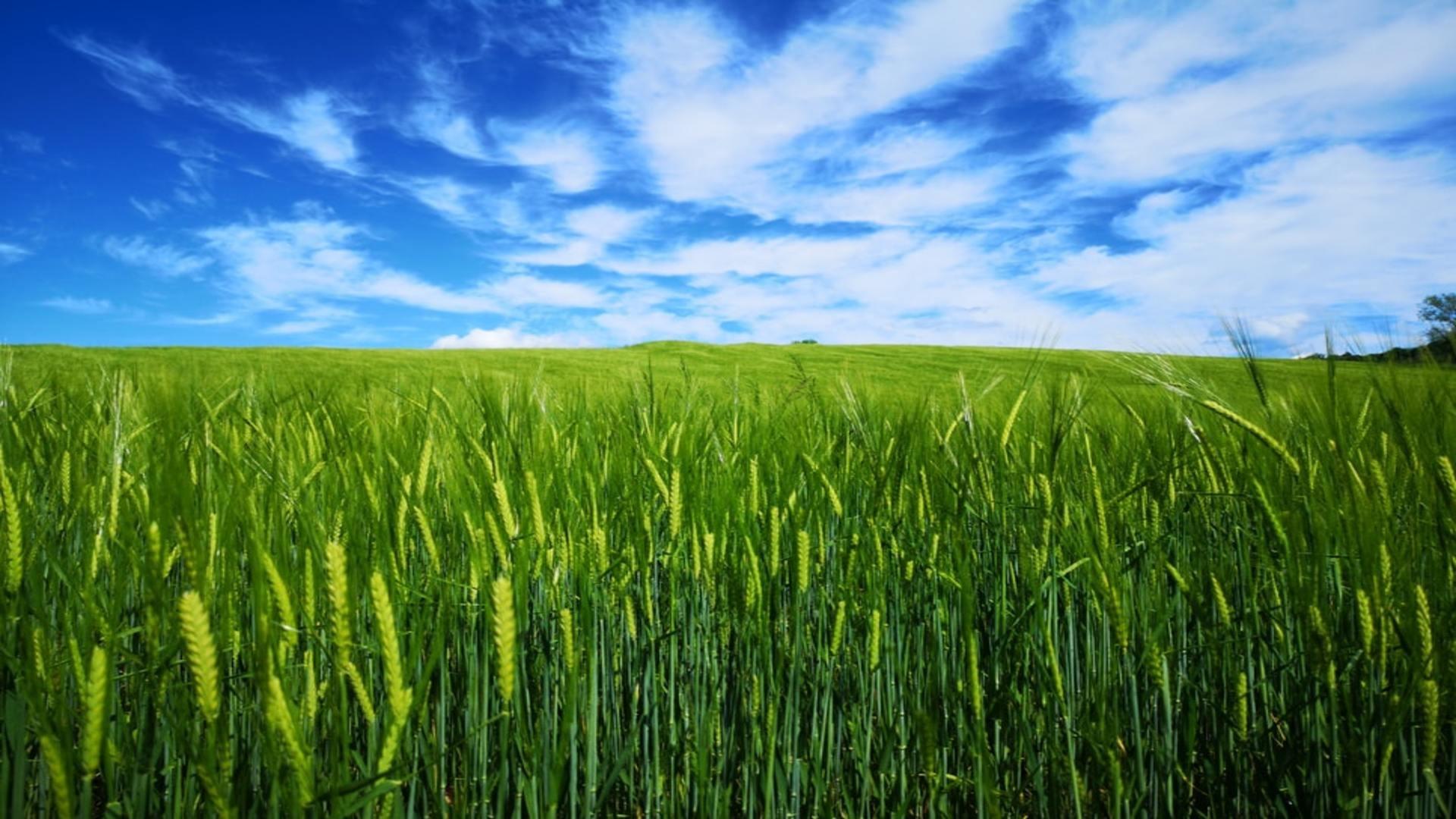 So schützen Hülsenfrüchte das Klima