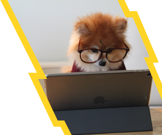 A dog with glasses looking at an ipad.