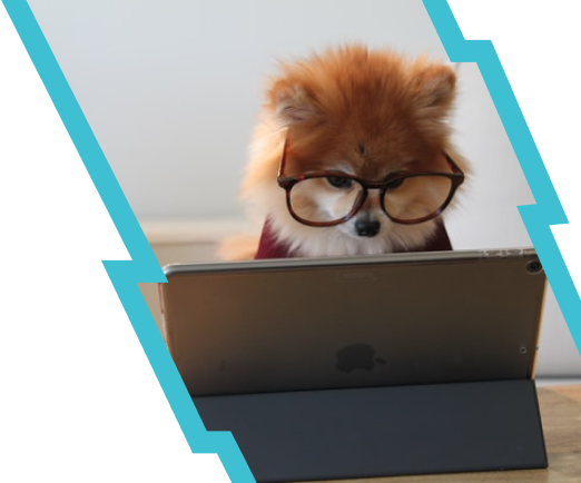 A cute dog with glasses working on an ipad.