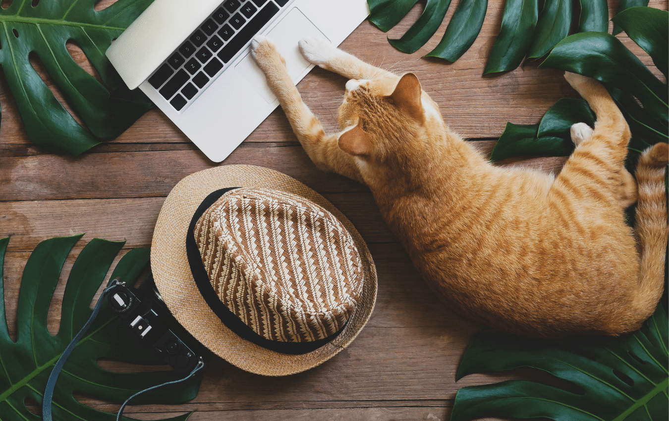 A cat laid on a desk next to a laptop and a hat
