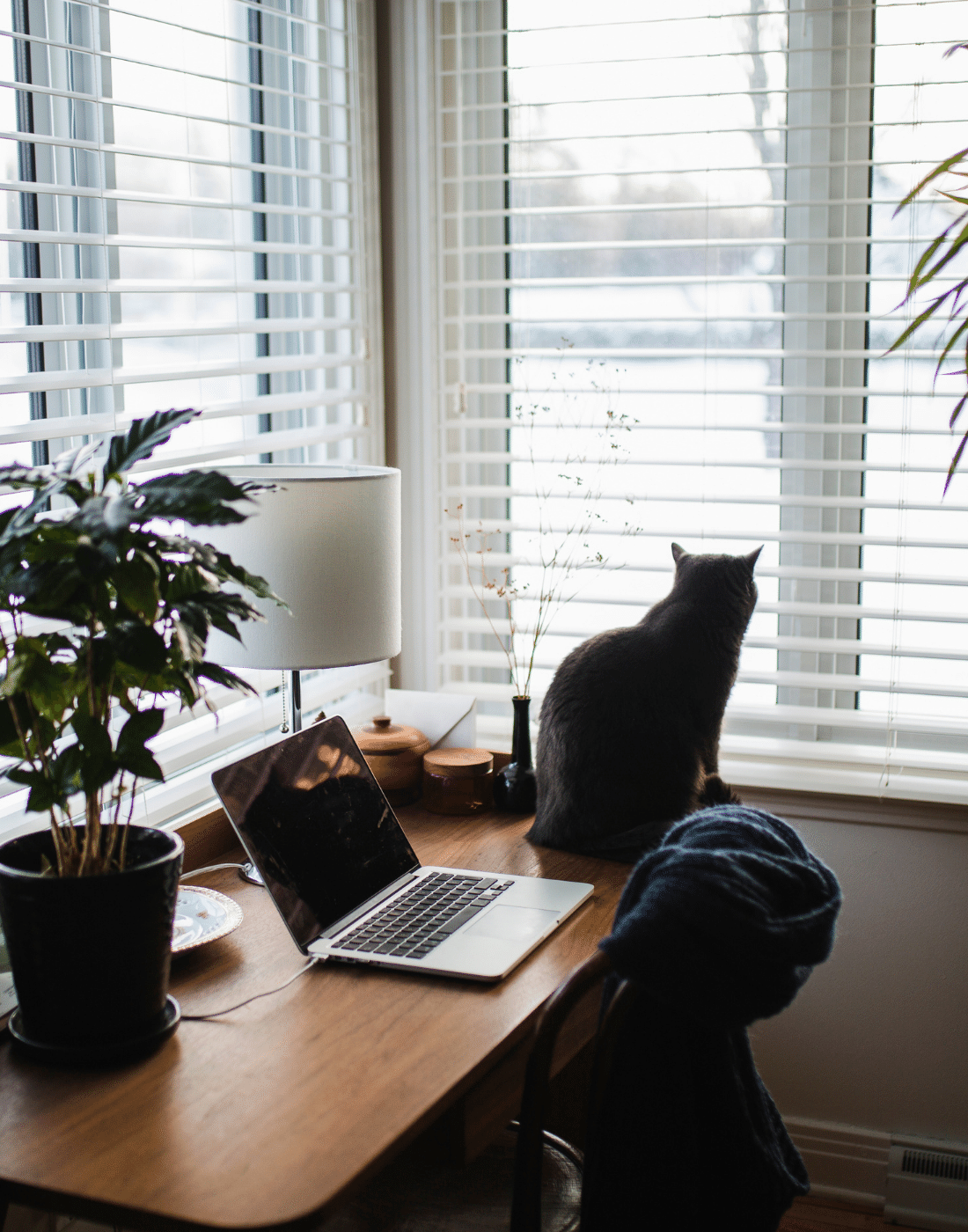 A cat sat on a home office desk in front of a window
