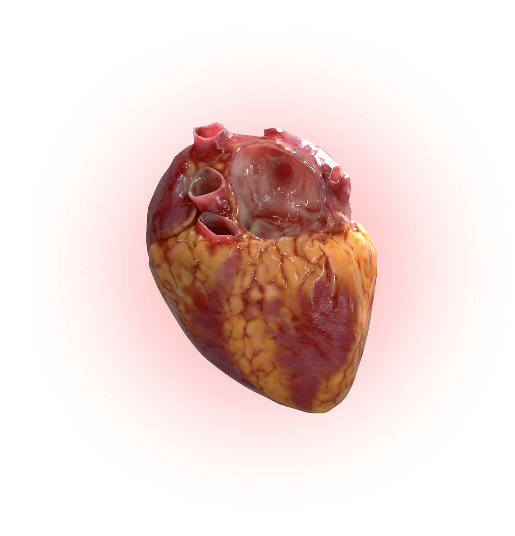 Rendering of Osso VR experience showing a human heart.