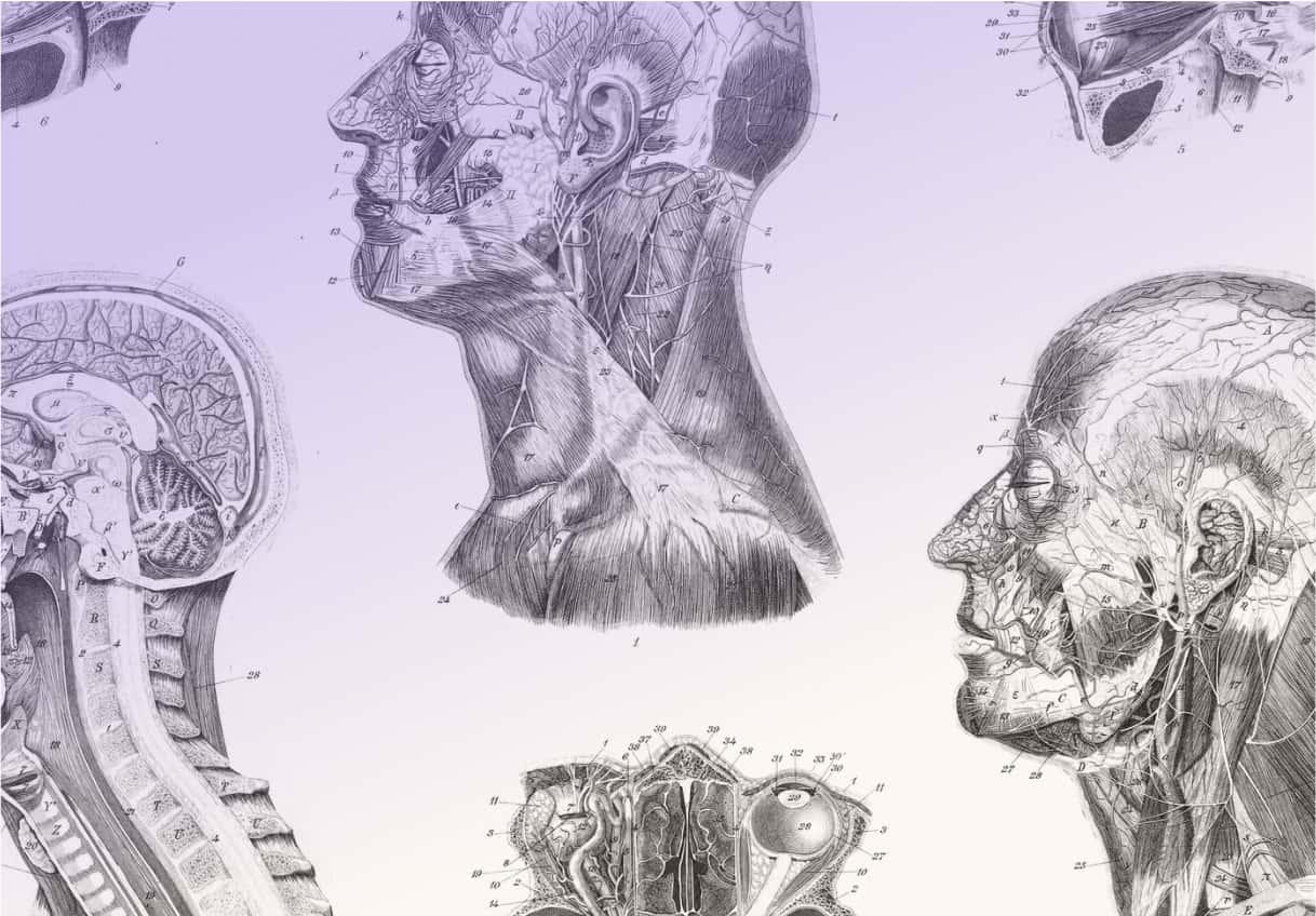 Detailed medical illustration