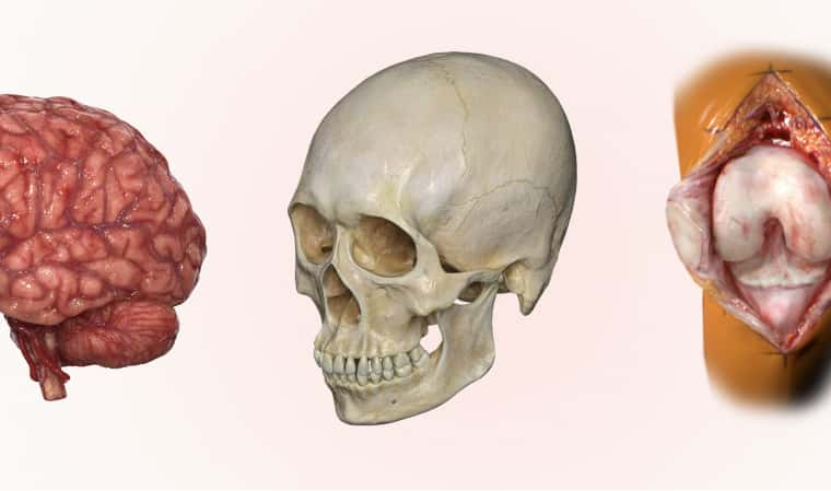 Renderings of VR experience showing a human brain, skull and knee joint.