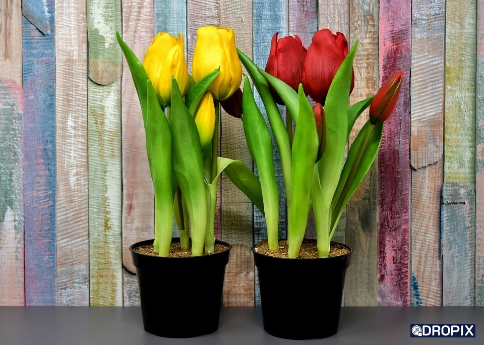 fleurs ecommerce dropshipping décoration dropix