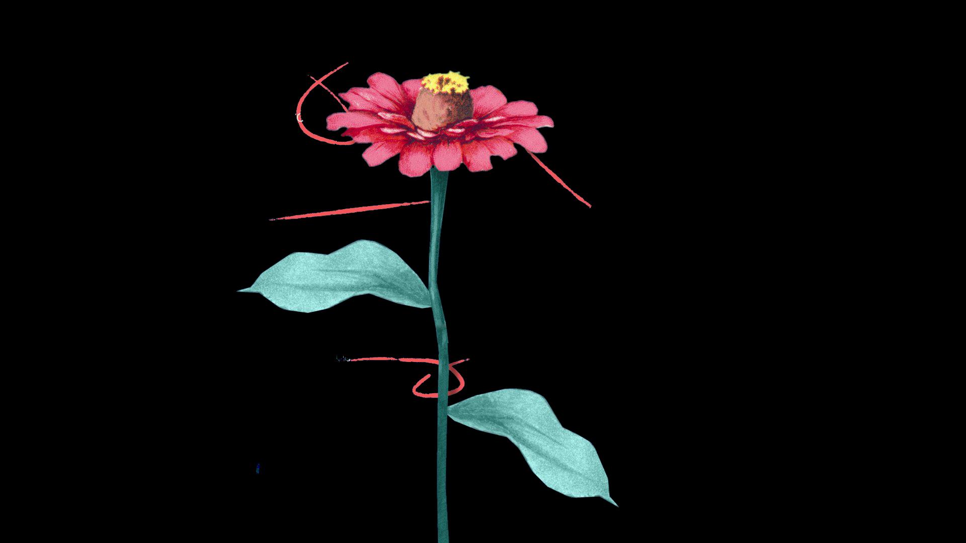 Frankli's colour coded hand drawn flower showcasing the benefits of frankli's developmental platform