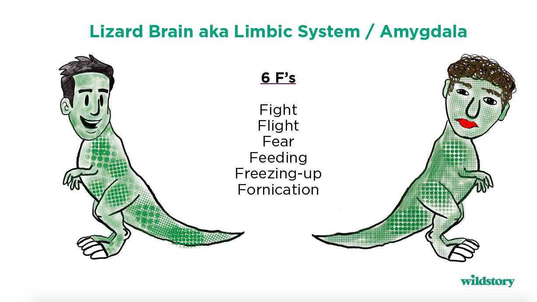 Lizard Brain aka Limbic System / Amygdala