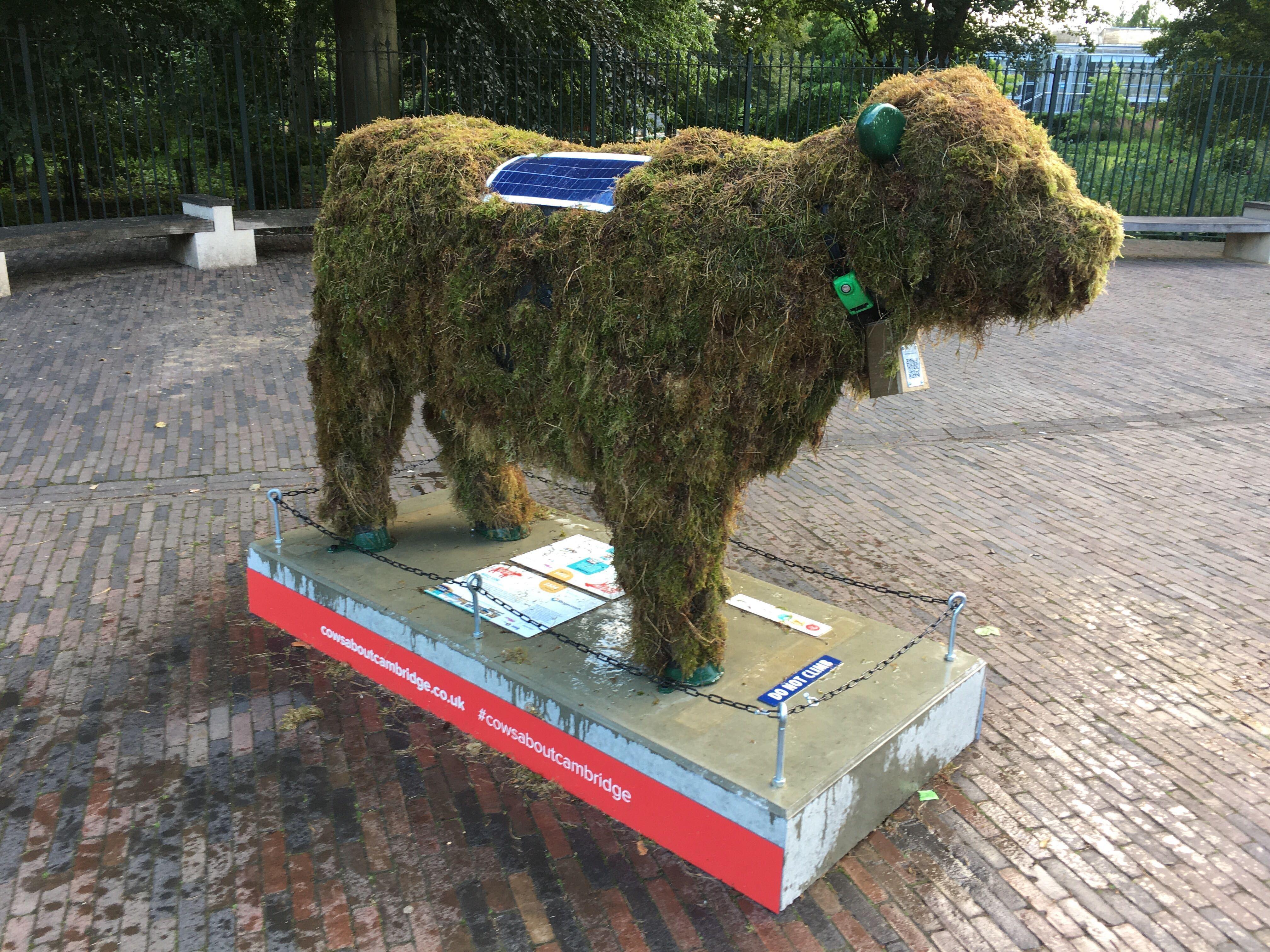 Moss cow