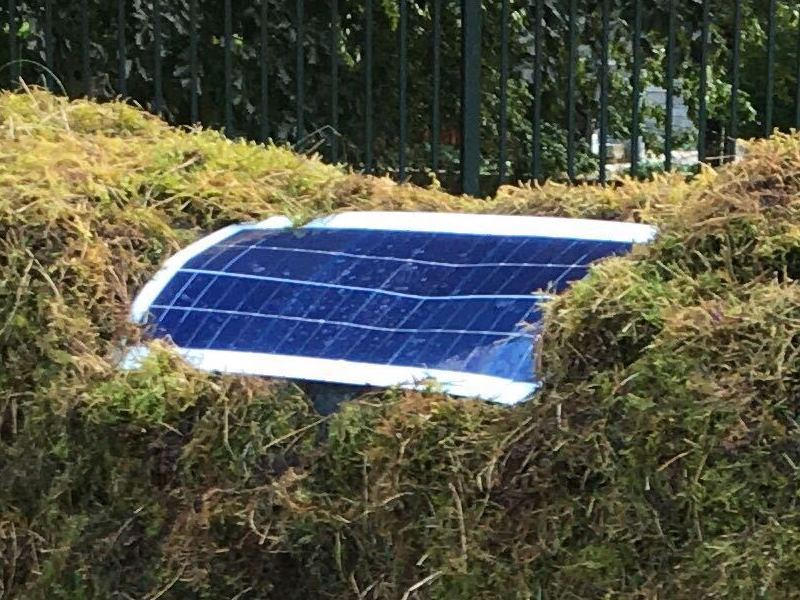 Close-up of solar panel on cow's back