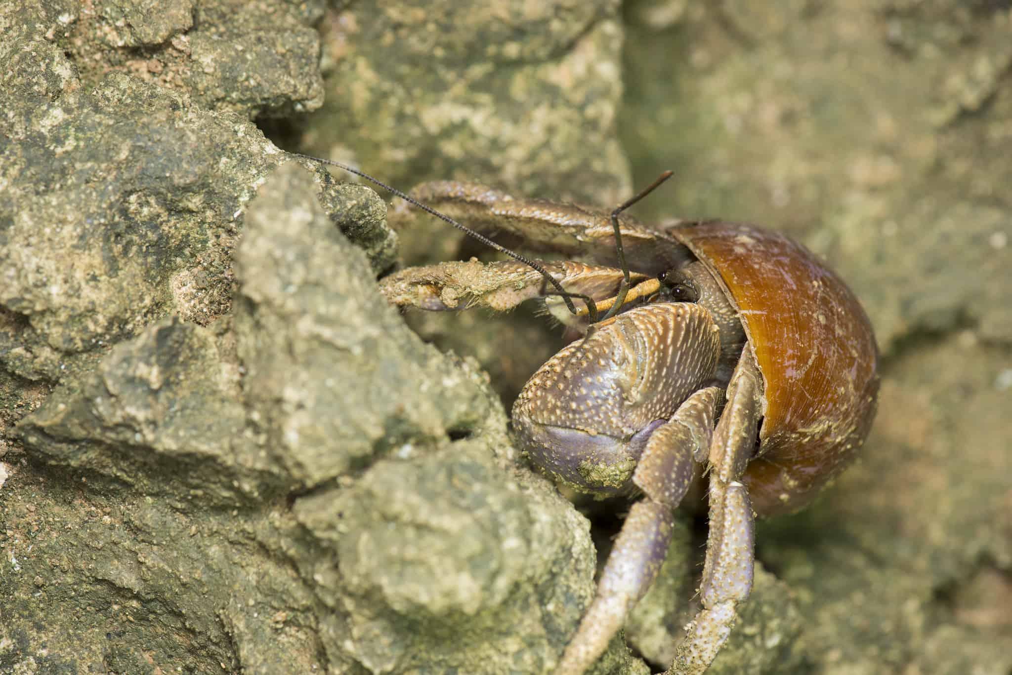 hermit crab on the rock