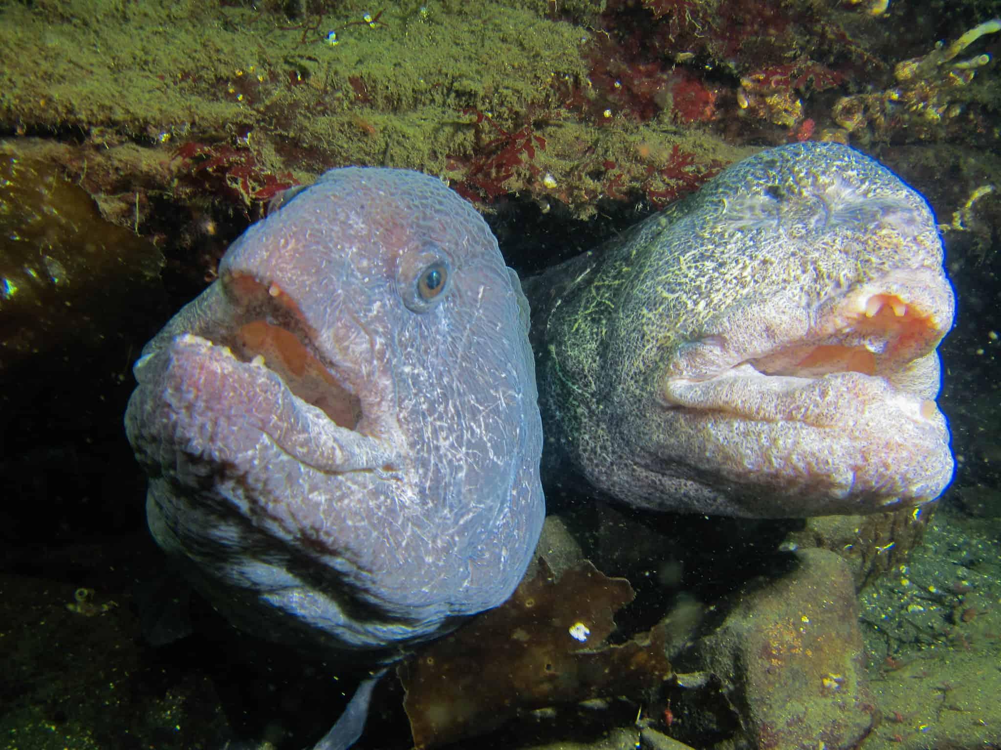 two eels in a den