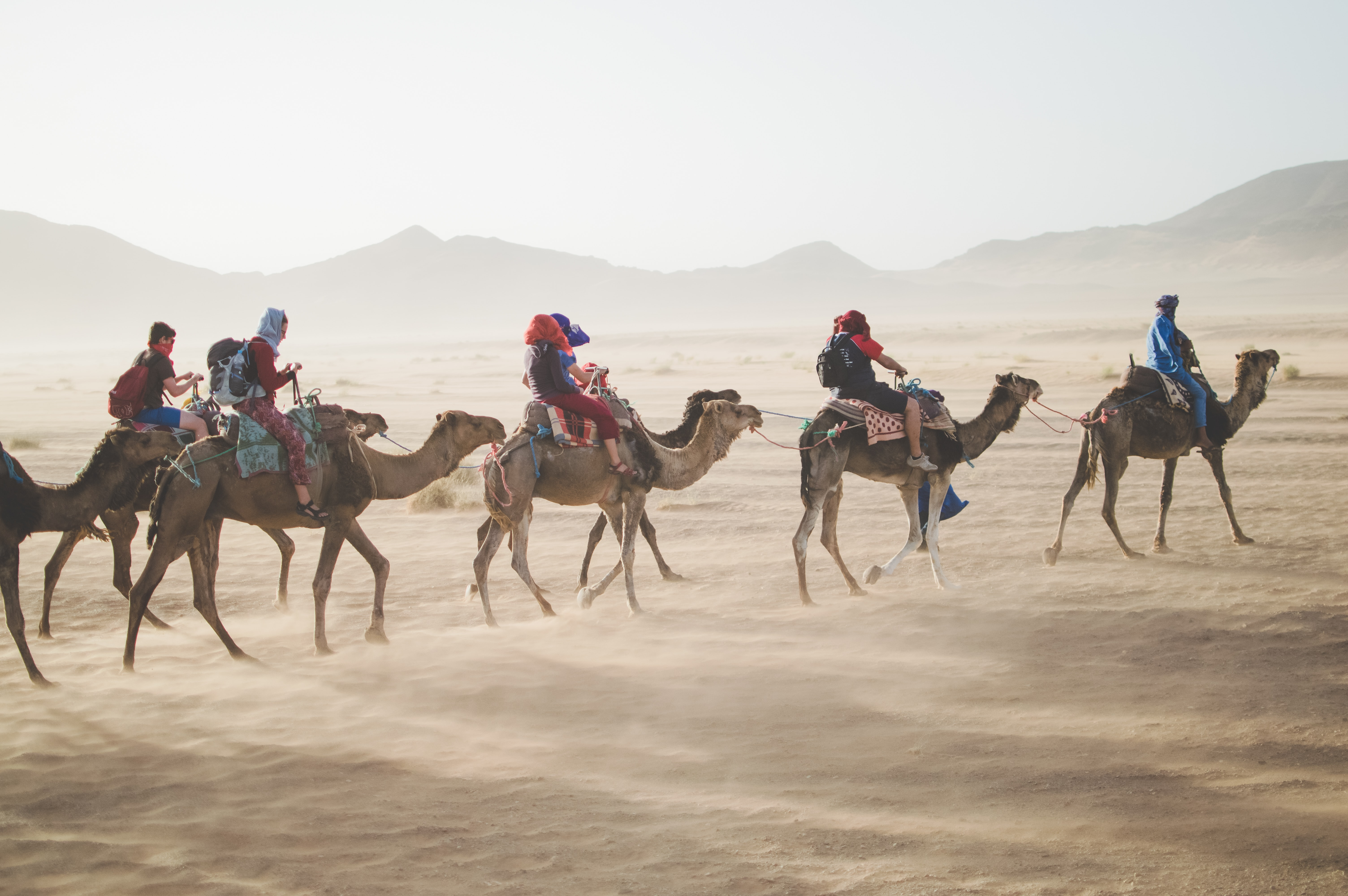 Camels crossing the dessert