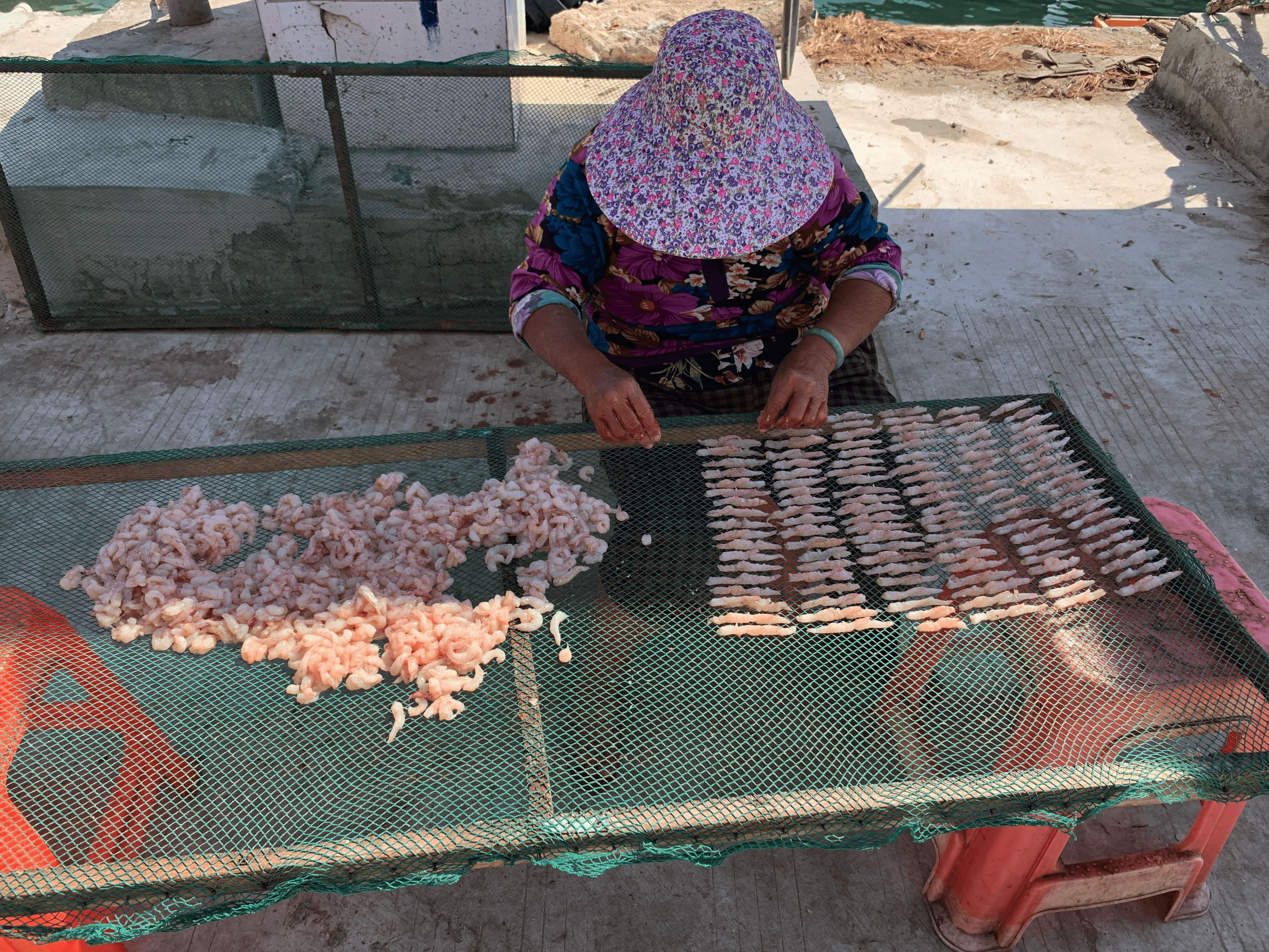 January 2021,a woman drying shrimps by the pier in Lingshui, Hainan. Photo / Laifu