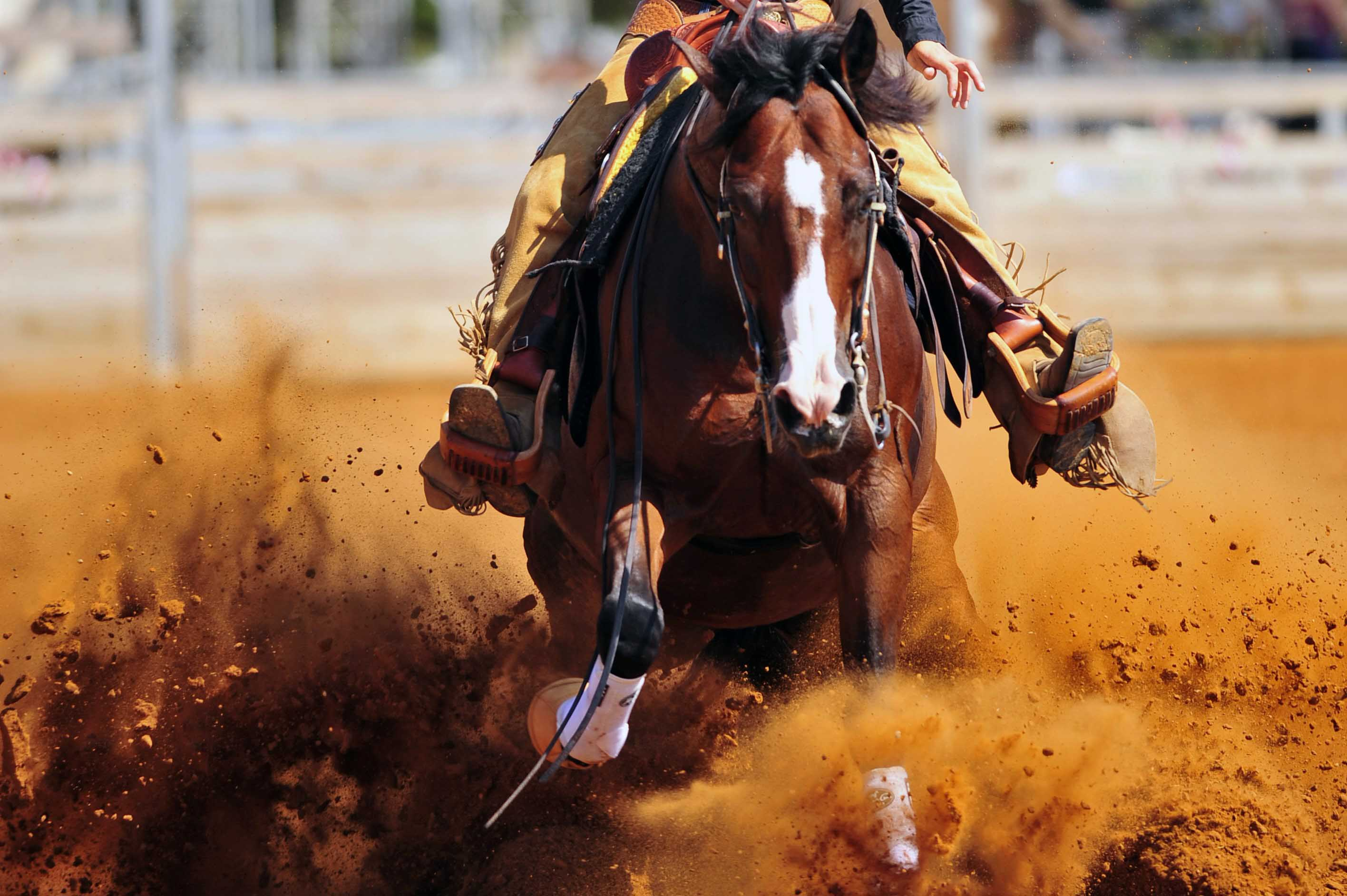 Rider on horse kicking up dirt in a rodeo arena