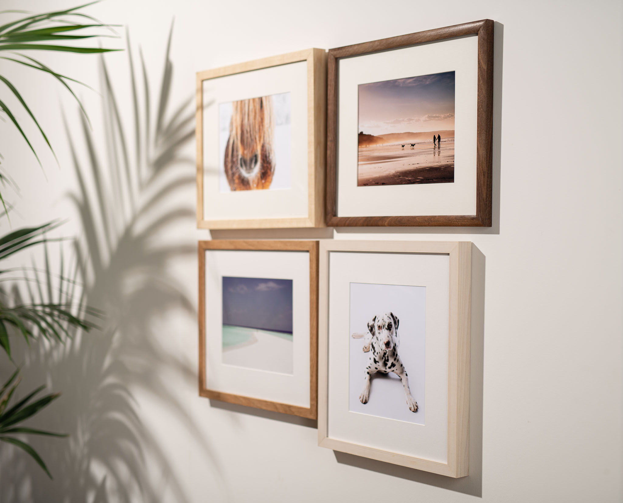 a girl viewipnhoto of four hardwood frames on a wall with a shadow cast by a palm plant.