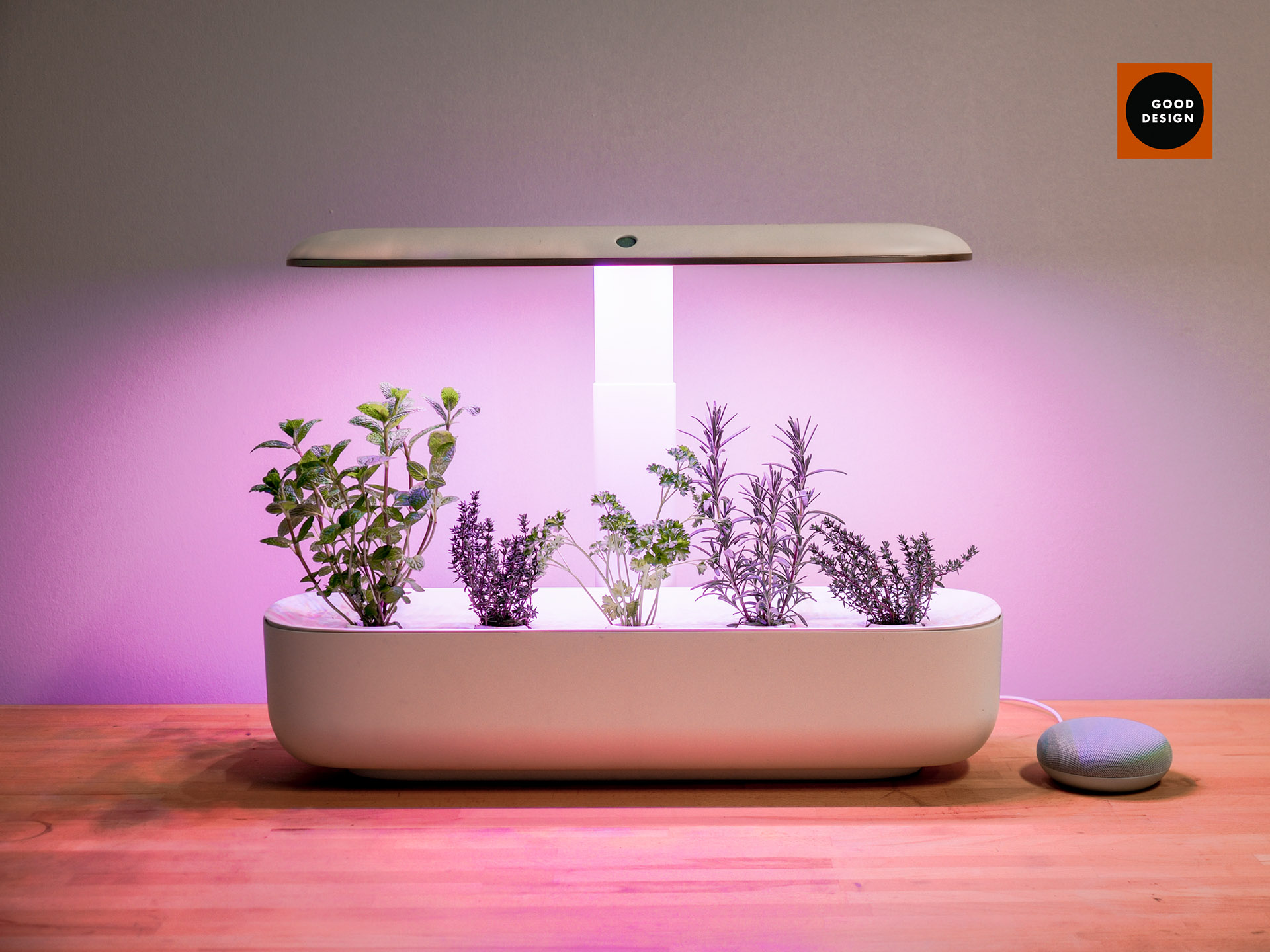 The AVA Smart Garden on a wooden countertop with a seafoam coloured Google Nest Mini. The AVA Smart Garden is lit purple and is growing an assortment of herbs.