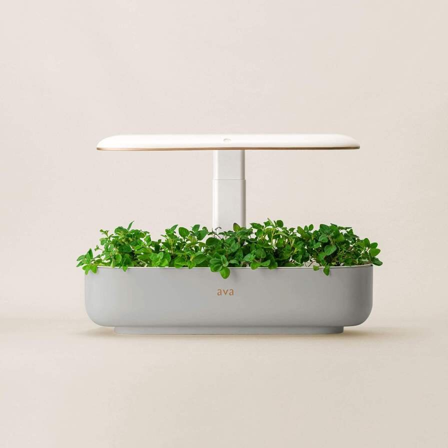 The AVA Smart Garden from a front-on view on a cream coloured background, growing some herbs.