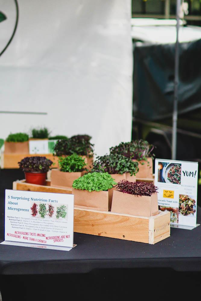 Microgreens from Mini Super Greens