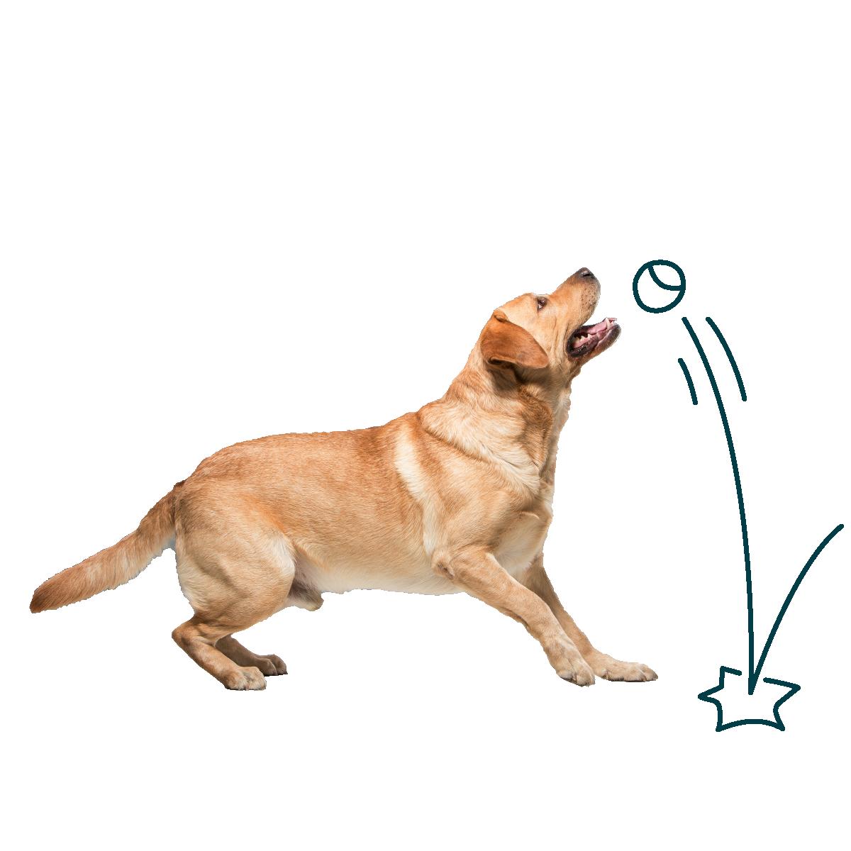 Dog catching a bouncing ball