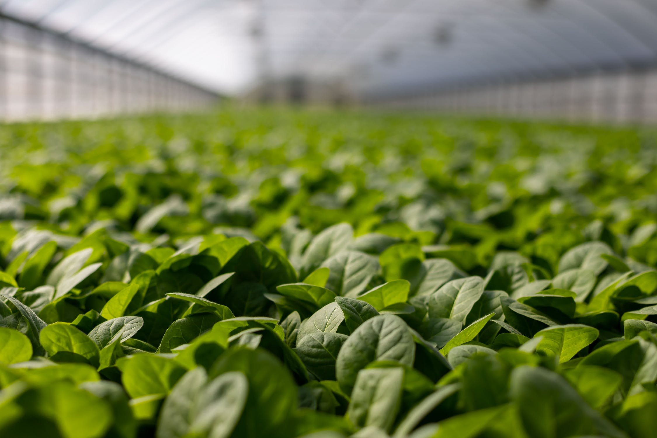 U.S. Department of Agriculture (USDA) Secretary Tom Vilsack announced today an investment of more than $146 million in sustainable agricultural research projects aimed at improving a robust, resilient, climate-smart food and agricultural system.This investment is made under the National Institute of Food and Agriculture's (NIFA) Sustainable Agricultural Systems program. This innovative program focuses on a broad base of needed research solutions from addressing labor challenges and promoting land stewardship to correcting climate change impacts in agriculture and critical needs in food and nutrition.