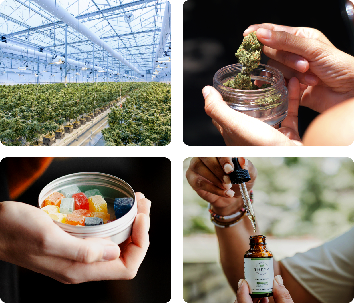 Products of the cannabis industry